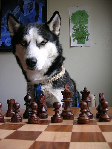 dog_playing_chess